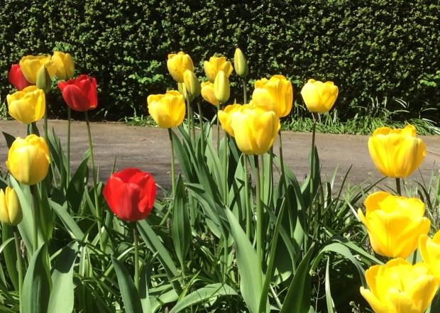 Stock market, schmock market. Go out and enjoy Spring.